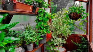 GreenHouse-wall02 (7)